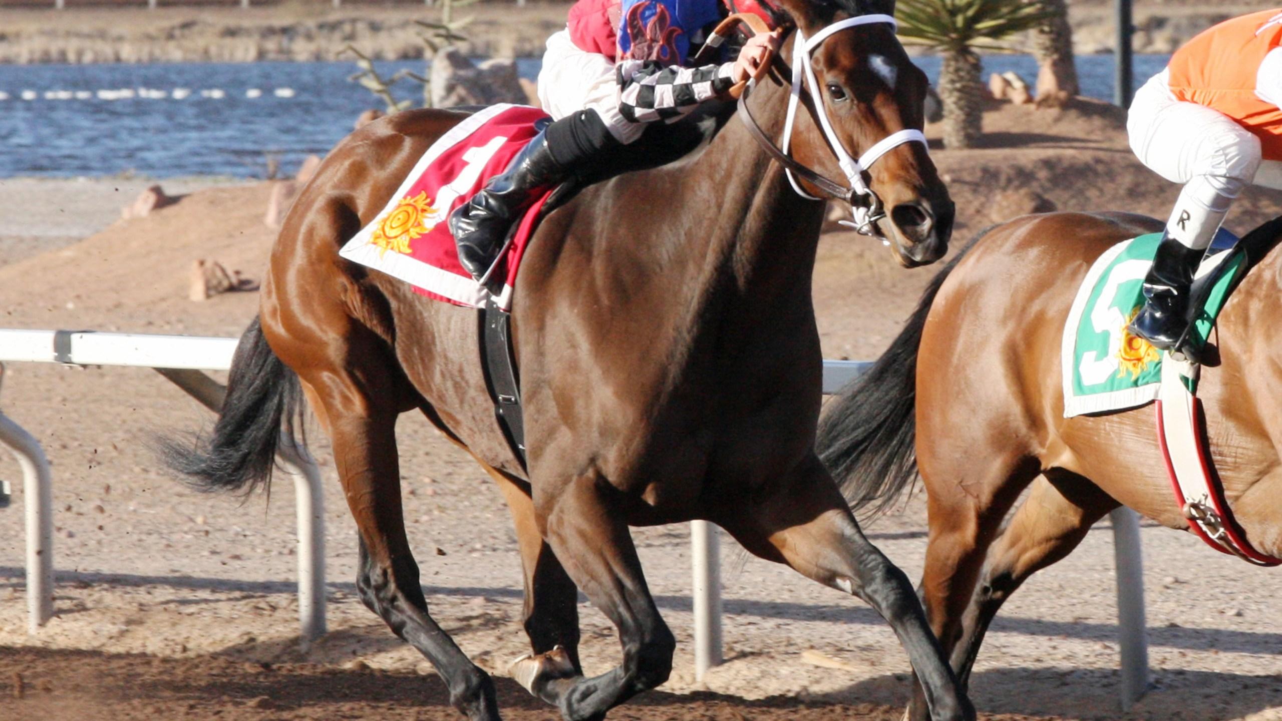 sunland park mybikinifelloff horse_1450657787323.jpg