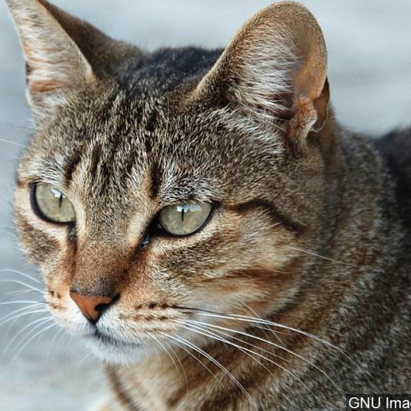 generic cat_MGN_1456254081267.jpg