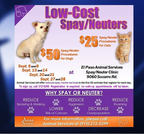 low cost spay_1471539407444.JPG