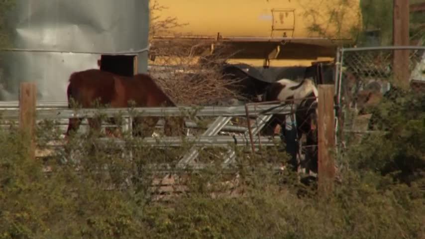 EPCSO investigates animal cruelty case_55790232-159532