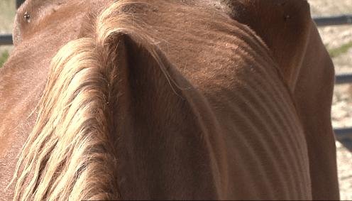 horses2_1475110402233.PNG