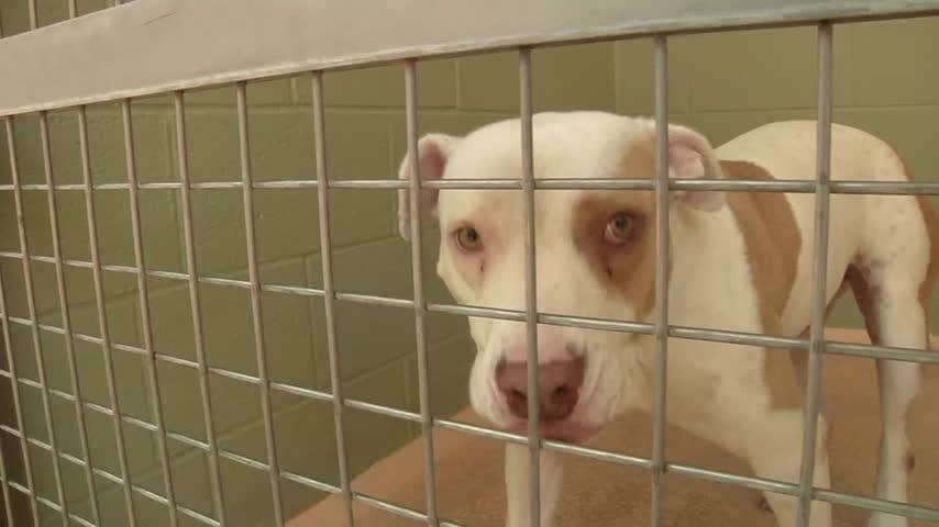 Founder-s Day- El Paso Humane Society_57898170