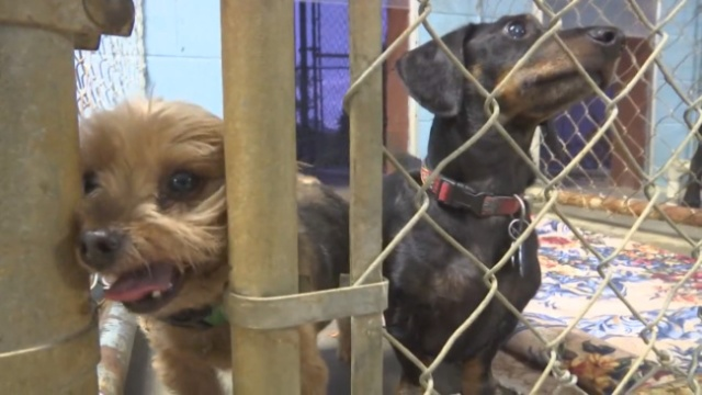 Animal Services asks for foster homes as cold temperatures near