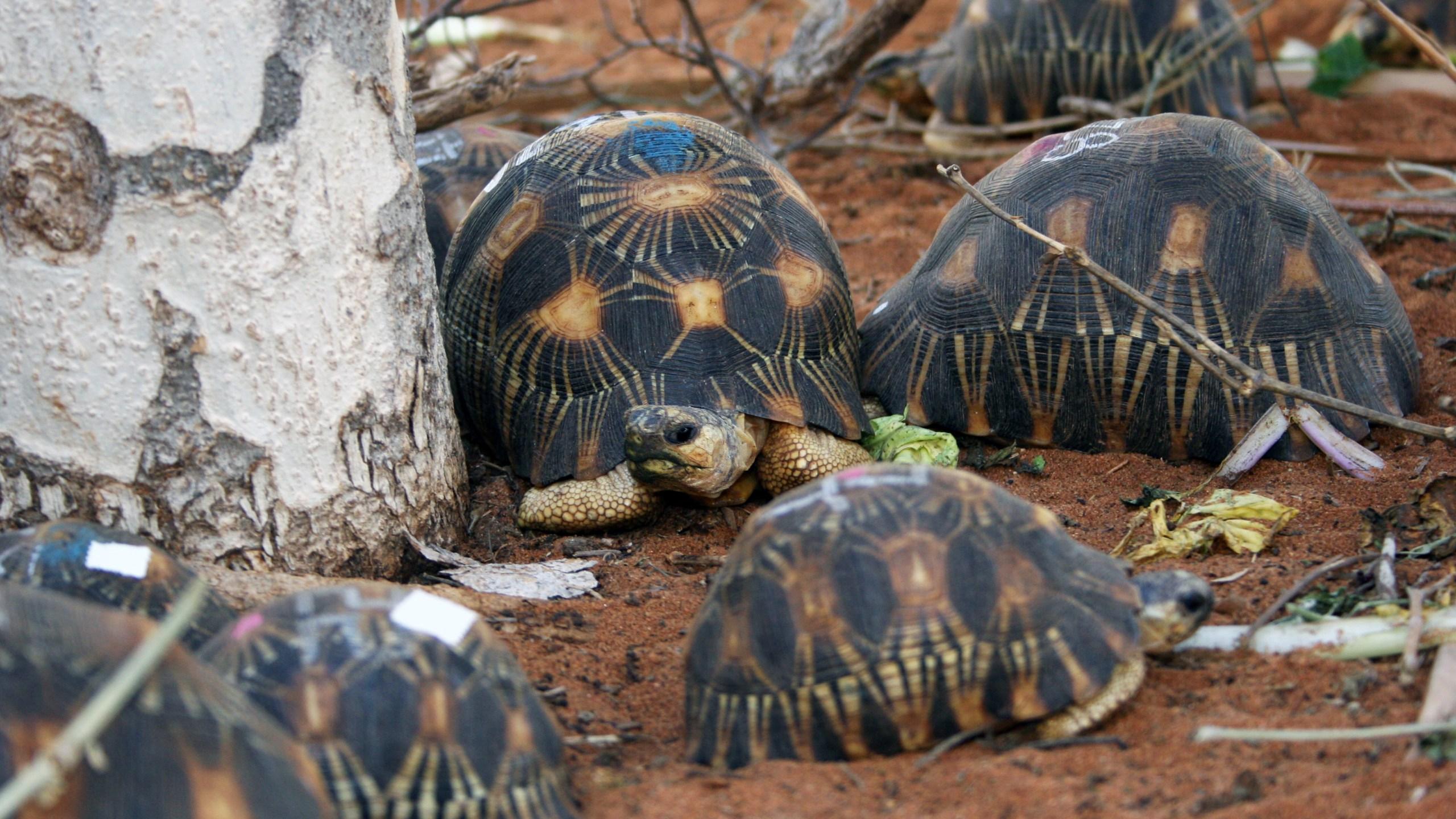 turtles_1529635601156.jpg