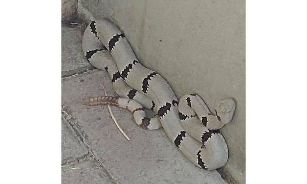 snake_1531797274780.jpg