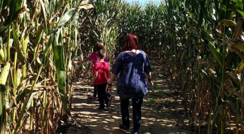 9464969f44c La Union Maze ranked among top 25 best in country, now open for season