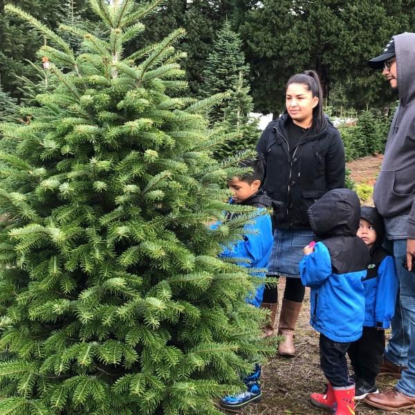 Christmas_Tree_Debate_56488-159532.jpg23333562