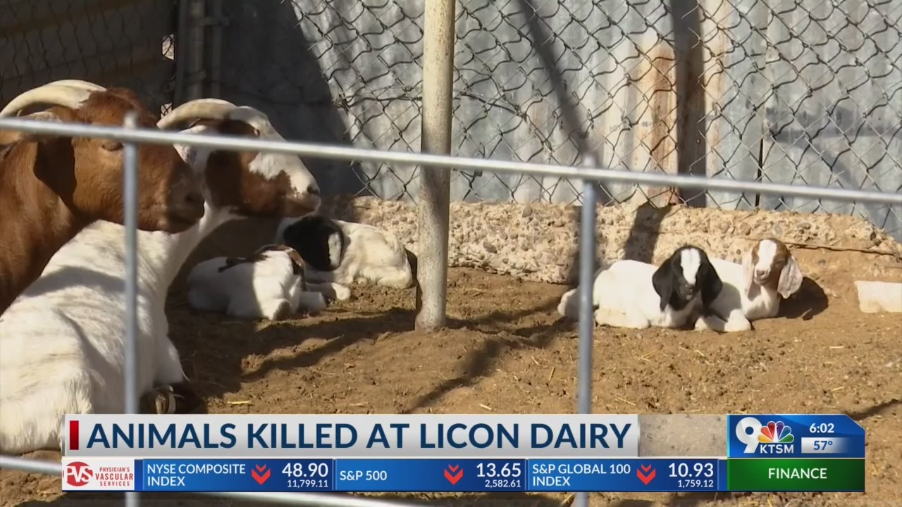 10 animals killed in dog attack at Licon Dairy Farm