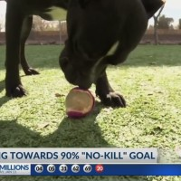 Animal Services working towards 90% no kill goal