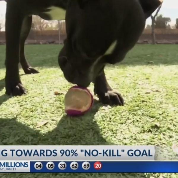 Animal Services working towards 90% no kill goal