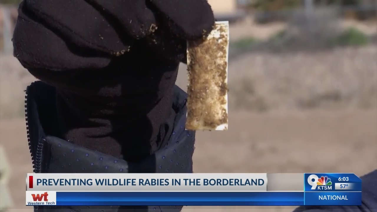 Work to prevent wildlife rabies in the Borderland