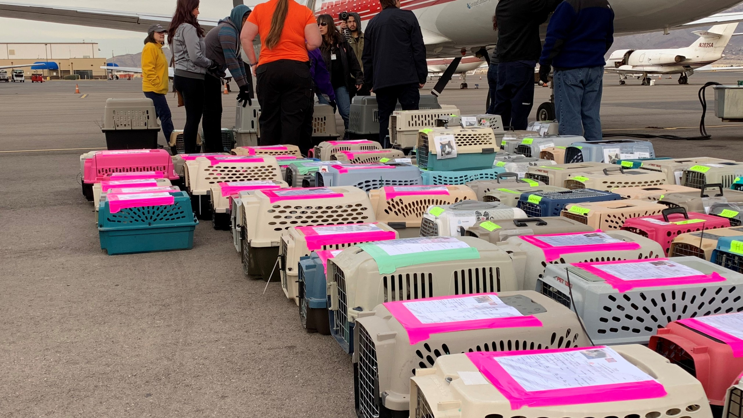 Shelter pet flight_1550070589266.jpg.jpg