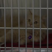 Humane Society debuts neonatal nursery during 'kitten shower' event