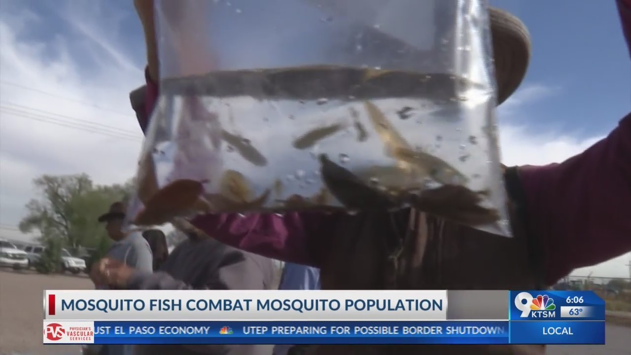 An unusual way to combat the mosquito population as we approach the summer months