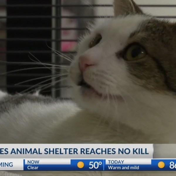 "Animal Service Center of the Mesilla Valley becomes ""no kill"" shelter"