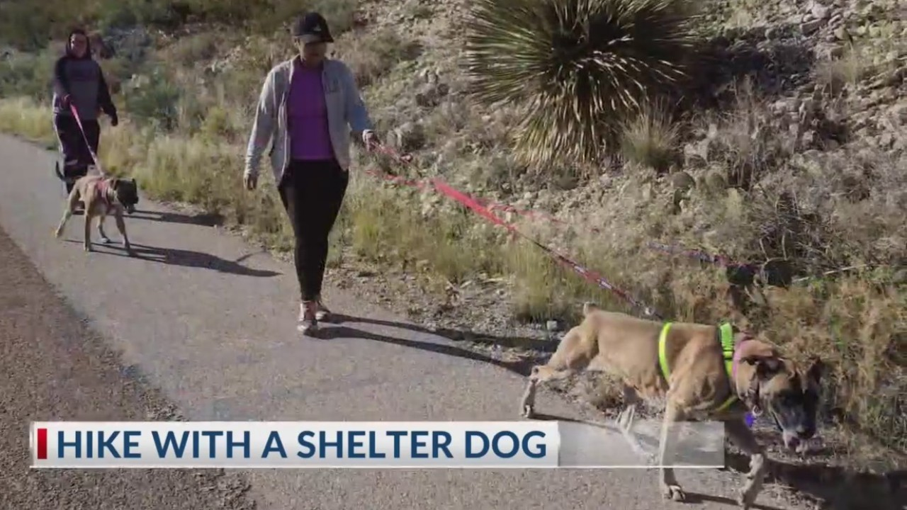 Hike with a shelter dog