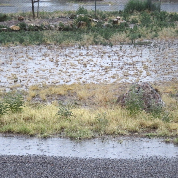 record rainfall in las cruces
