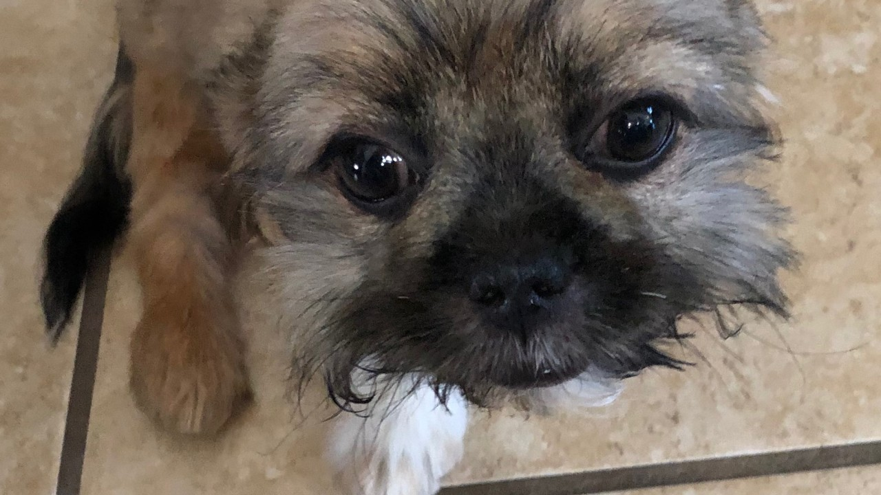 El Paso family blames local groomer for dog's death; owners respond