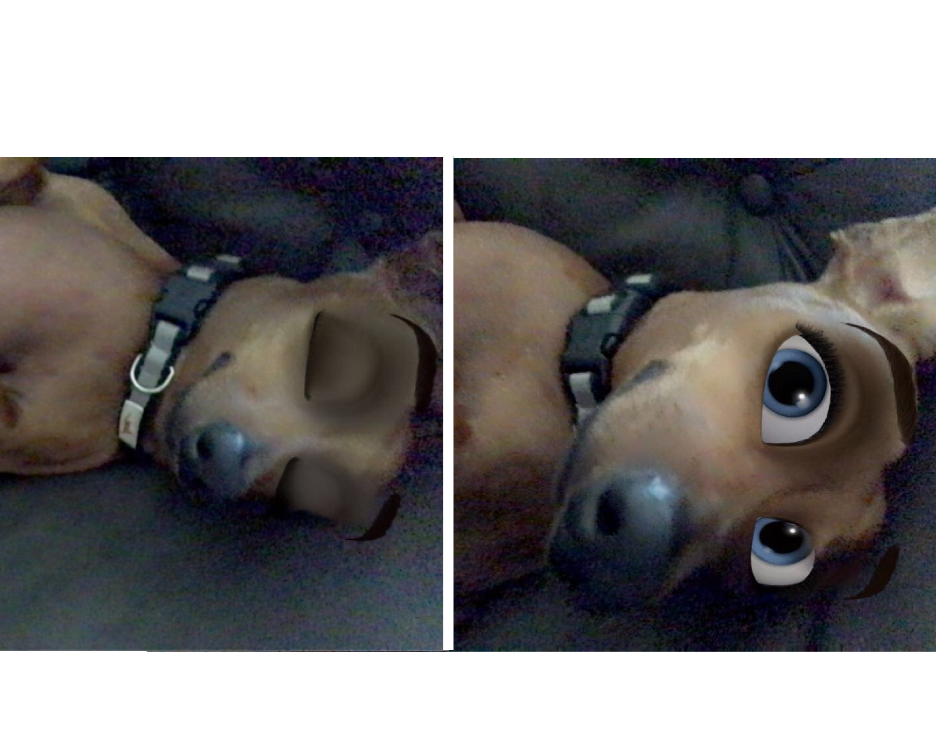 New Snapchat Filter Makes Your Dog Look Like A Disney Character