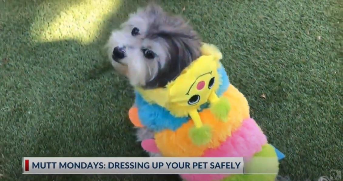 Mutt Monday_Dressing up pets