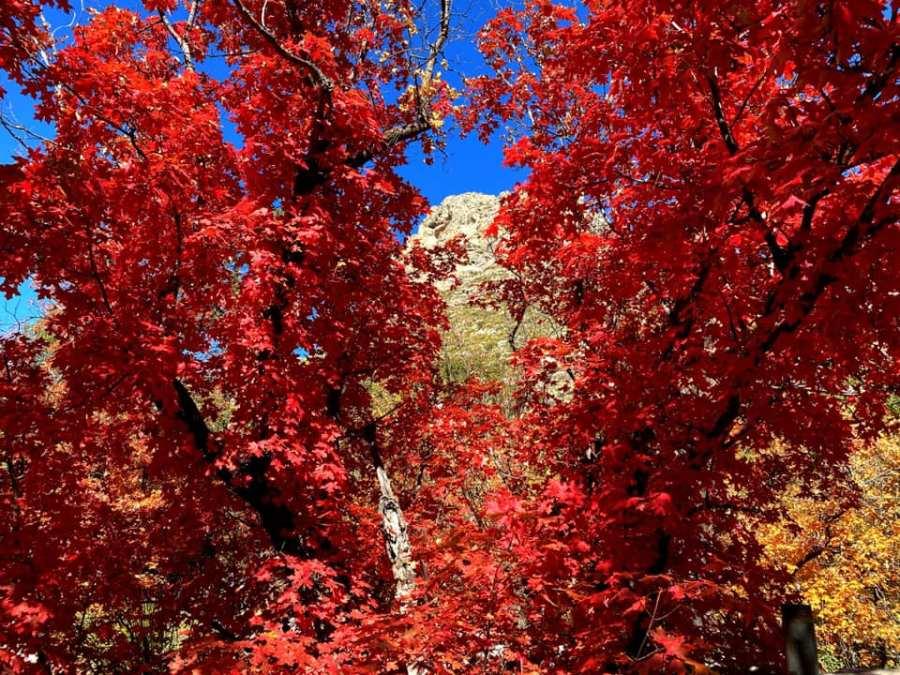 Jay Koester_McKittrick Canyon