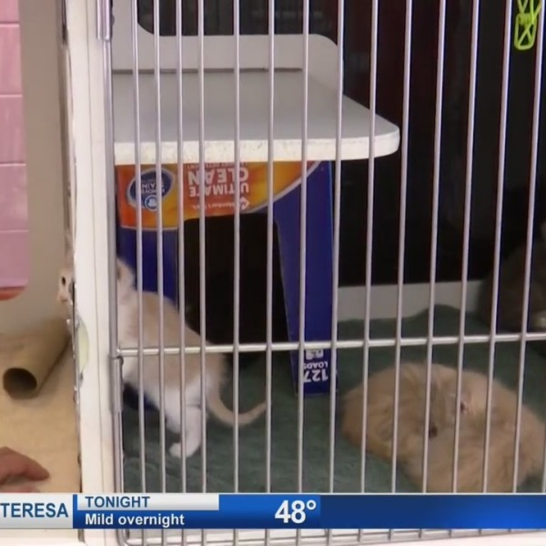 Screenshot of cats inside cage at El Paso Animal Services.