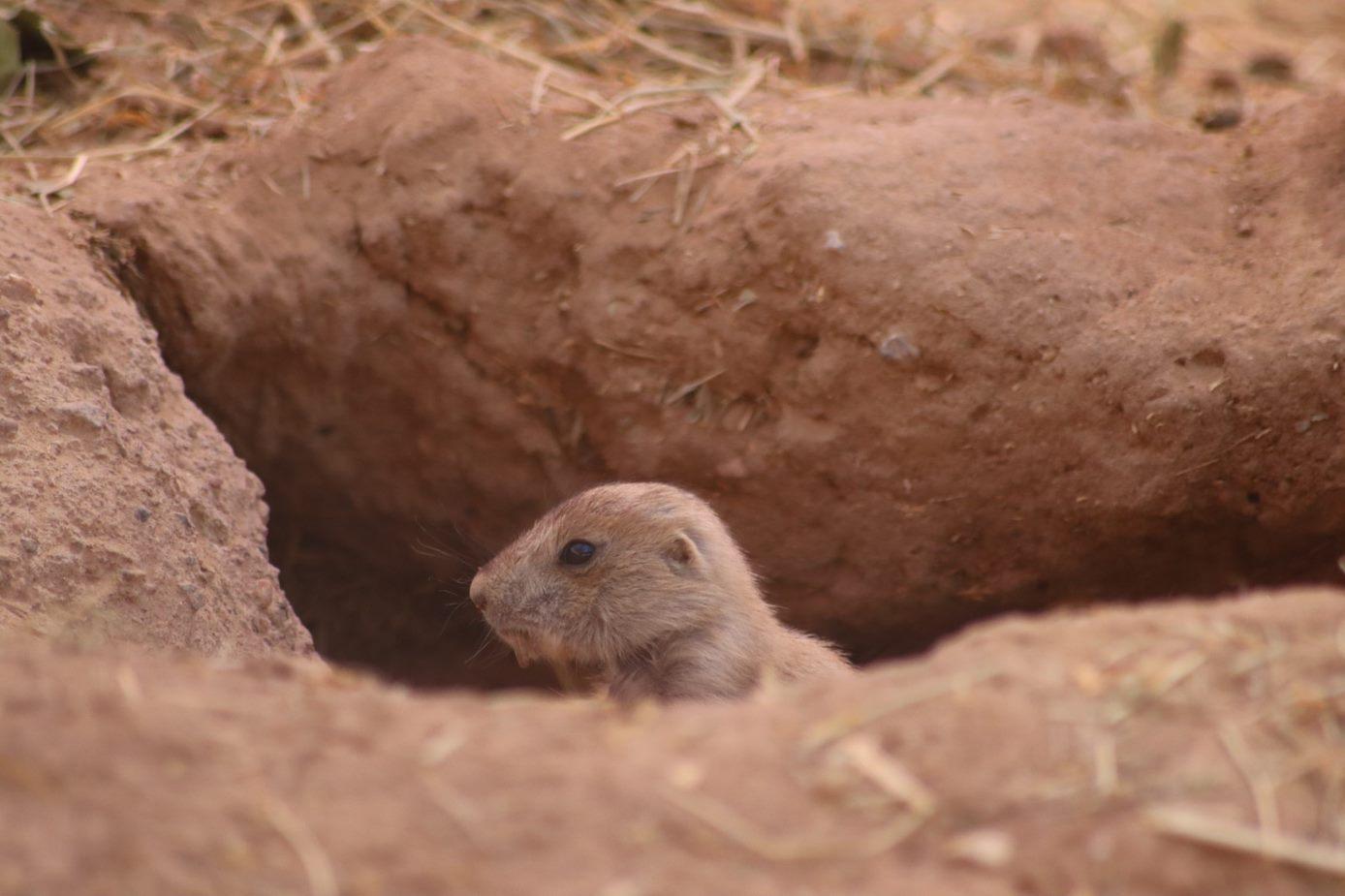 Courtesy: El Paso Zoo